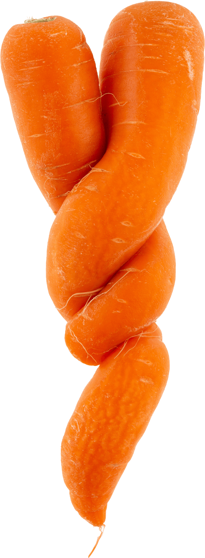 wonky-carrot-1