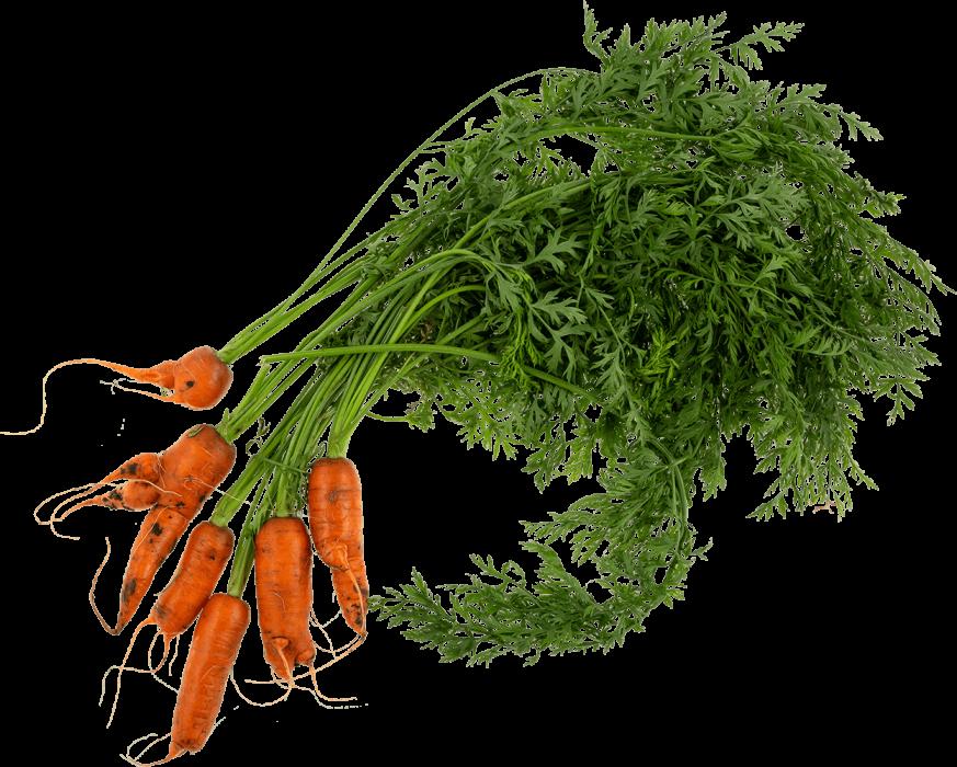 wonky-carrot-4