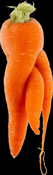 wonky-carrot-7